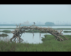 Wetlands Environmental Art Project Call for Proposals, by 01.18